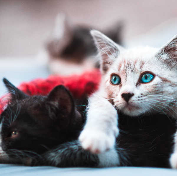 cat_sitting